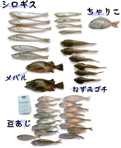blog_import_56e107fabb988